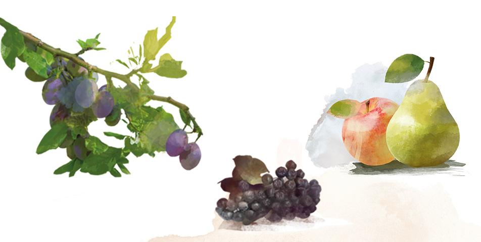 ekologiczne-warzywa-i-owoce-1