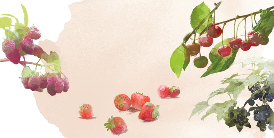 ekologiczne-warzywa-i-owoce-2