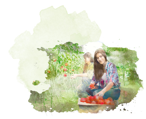 Ekologiczne-warzywa-i-owoce-wstep